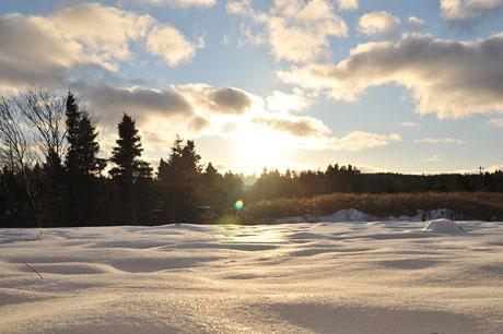 Winter wonderland (our backyard)