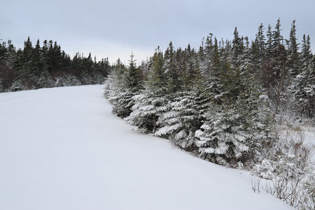 Snowy road to Cape Spear