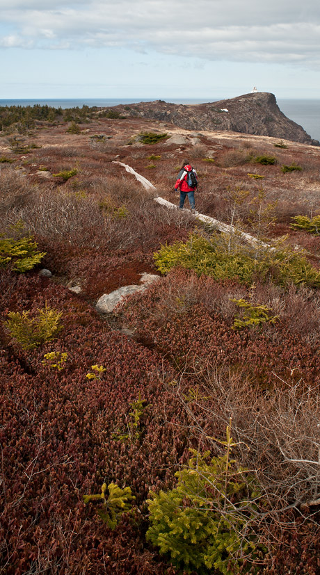 East Coast Trail boardwalks - Cape Spear Path