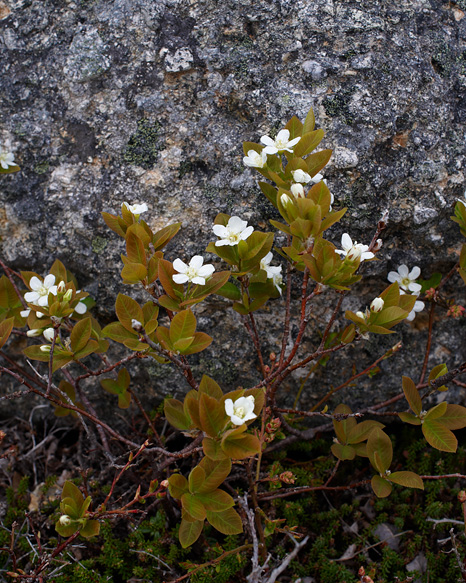Spring - Flatrock