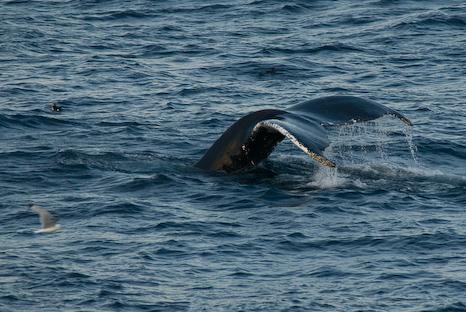 Very close to shore - Cape Spear