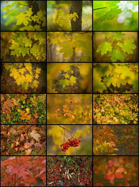 Fall colours in Bowring Park - St. John's