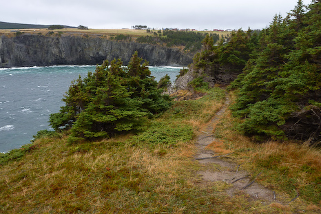 Marine Drive cliffs - Middle Cove