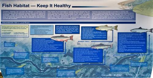 Fish Habitat information - St. John's
