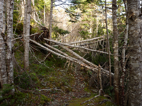 Obstruction - Cripple Cove Trail