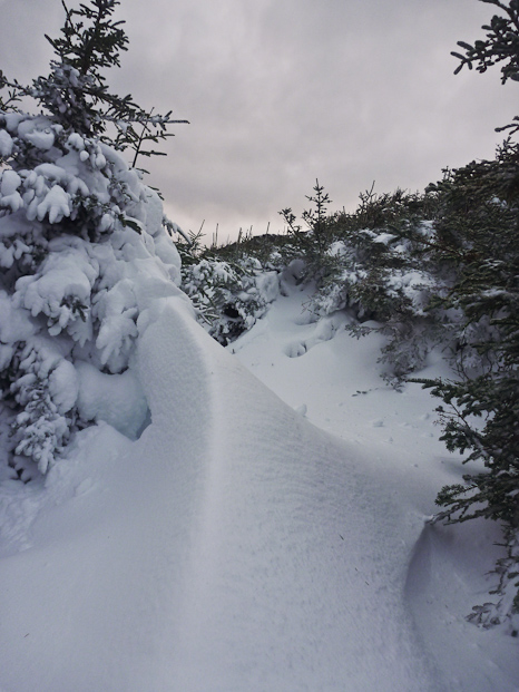Leaving the forest - Cobbler Path