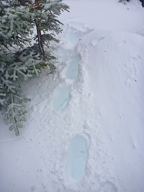 My tracks in the snow - Cobbler Path
