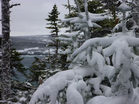 Snowy forest - Torbay
