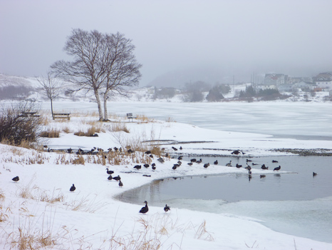 Quidi Vidi Lake - St. John's