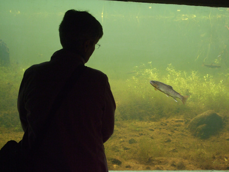 Mom looking at a Brown Trout - Fluvarium, St. John's
