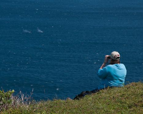 Marije watching Humpbacks - Red Head, Flatrock
