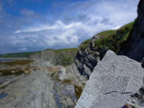 Graptolite Fossil at Green Point - Gros Morne