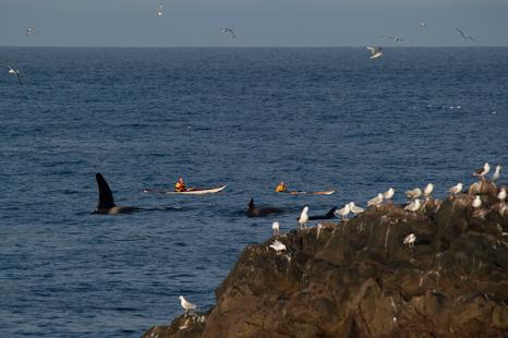 Kayak encounter - Logy Bay