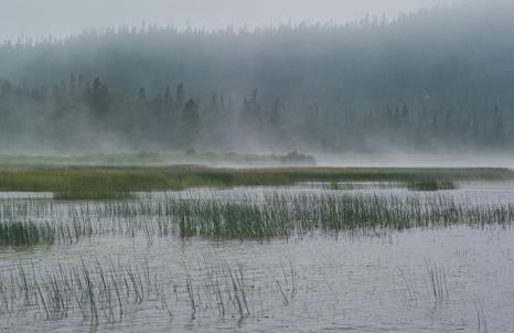 Fog on the pond - La Manche