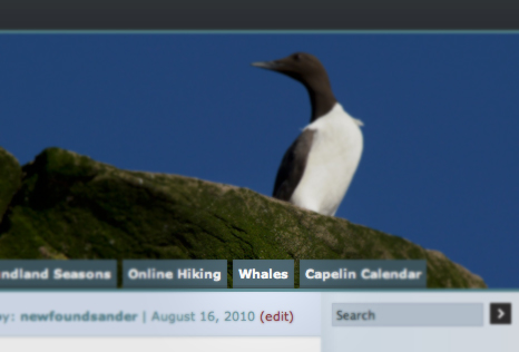 new on this blog: a Whales page