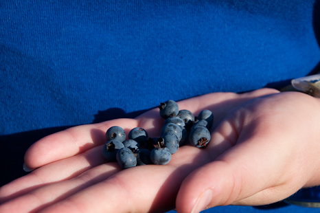 Marije shows some blueberries - Cobbler Path