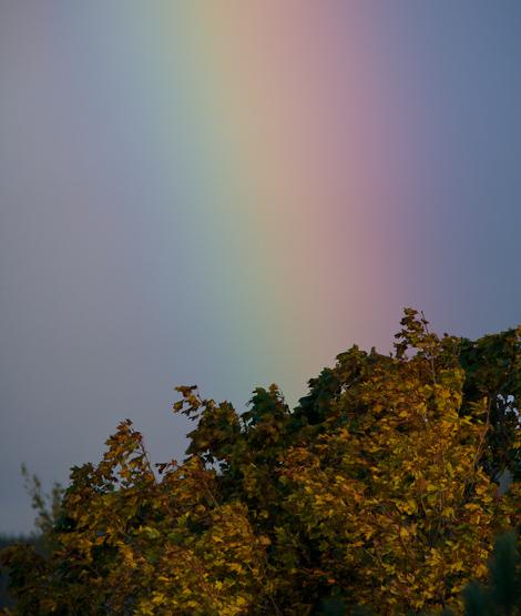 Autumn Rainbow - St. John's