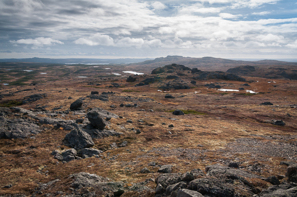 Beyond the barrens - Hawke Hill Ecological Reserve