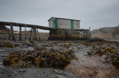 Low tide - Brigus South