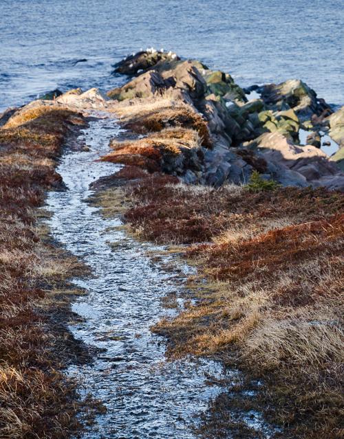 Watery trails - Blackhead Path