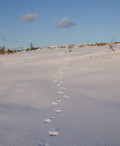 Footprints in the snow - Cape Spear Path