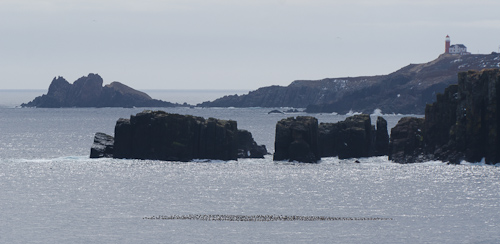 Common Eiders near Goose Island - Calvert Bay