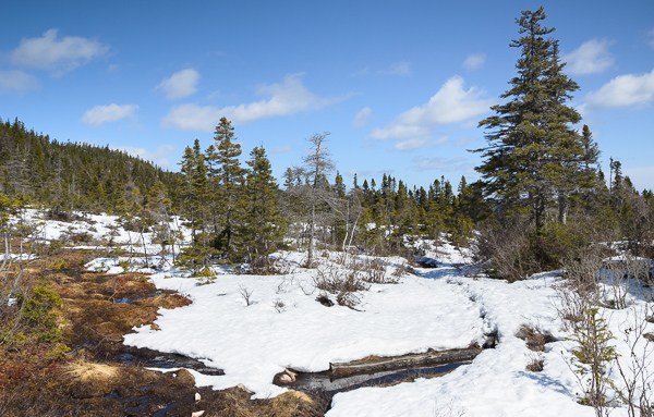 Melting snow - Freshwater Bay access trail