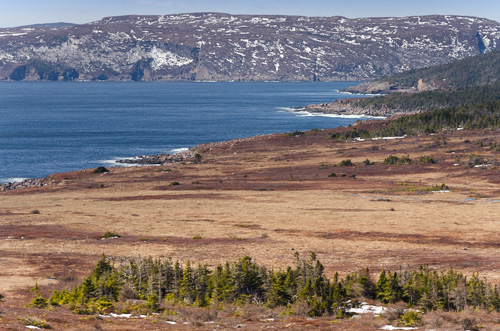 The start of spring - Cape Spear Path