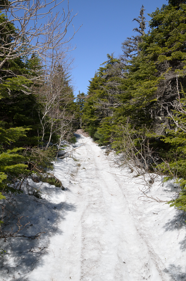 Snowy trail - Shoal Bay Road