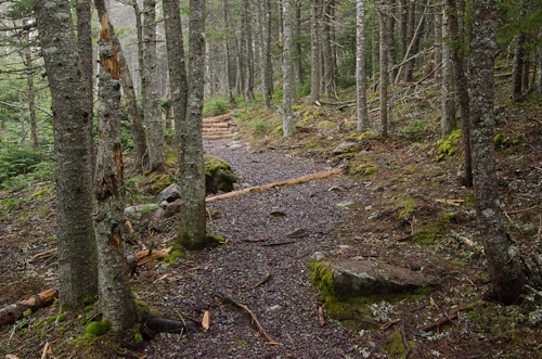Forest trail to Torbay Point - Cobbler Path