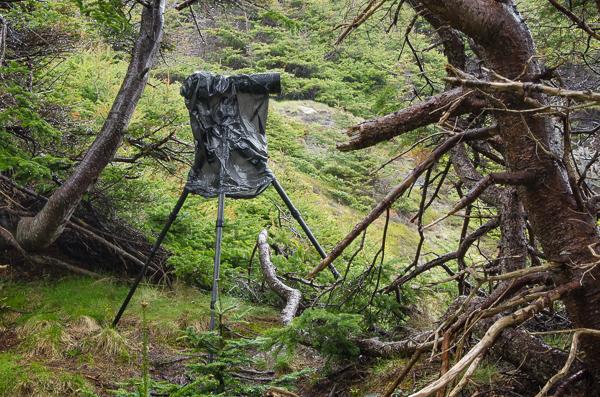 Trash bag raincoat - Herring Cove, Beaches Path