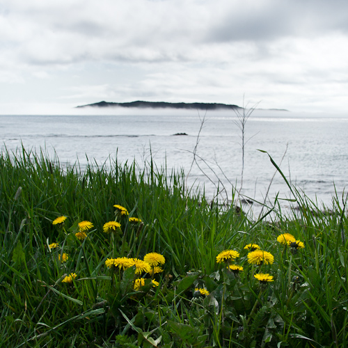 May 2011 - Witless Bay