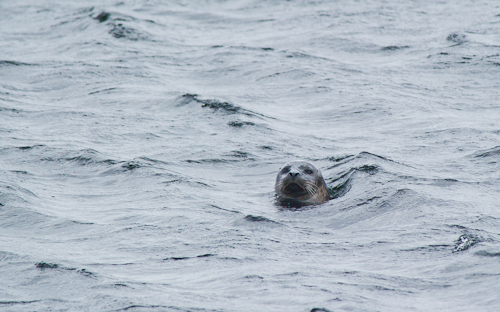 Curious Seal - Beaches Path