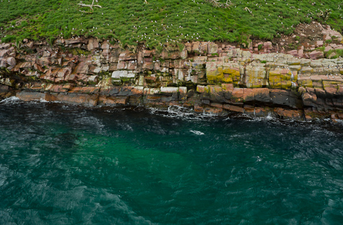 Gull Island and its Atlantic Puffins - Witless Bay Ecological Reserve