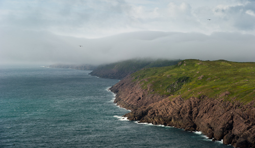 Fog rolling in - Cape Spear Path