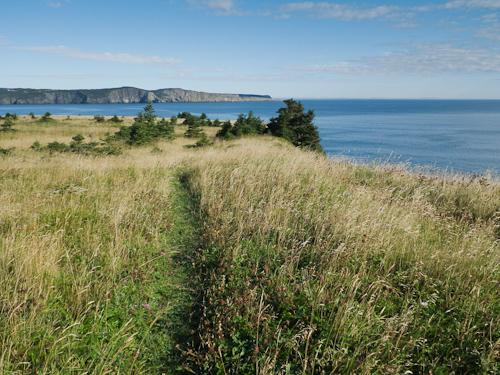 The trail on Ship Cove Point - Outer Cove