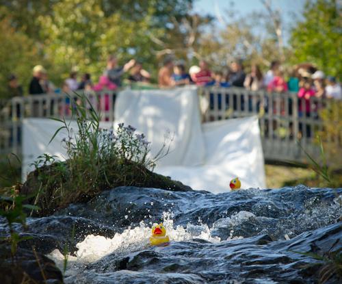 The race begins - Rennie's River, St. John's