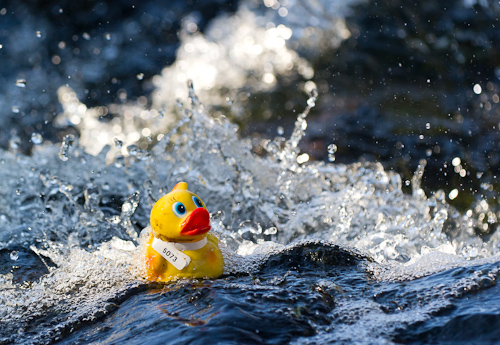Rubber Duck #5073 - Rennie's River, St. John's