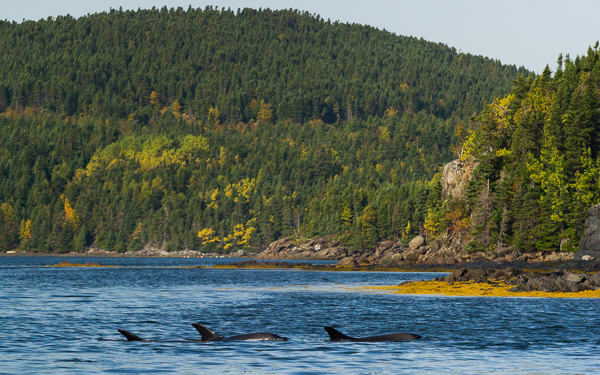 Dolphins in the bay - New World Island
