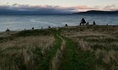 Seaside meadow - Father Troy's Trail