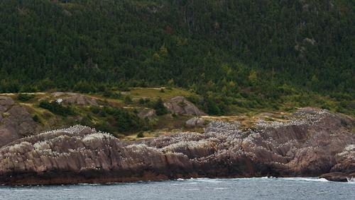 A Flock of Seagulls - Logy Bay