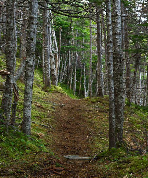 Quiet forest trail - Biscan Cove Path