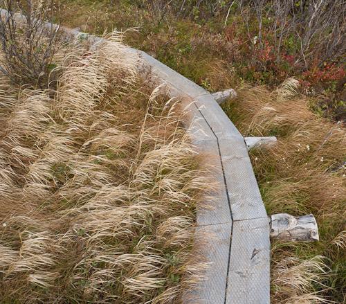 Boardwalk - Biscan Cove Path