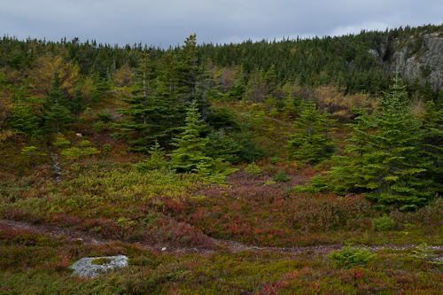 Fall coloured trail - Biscan Cove Path