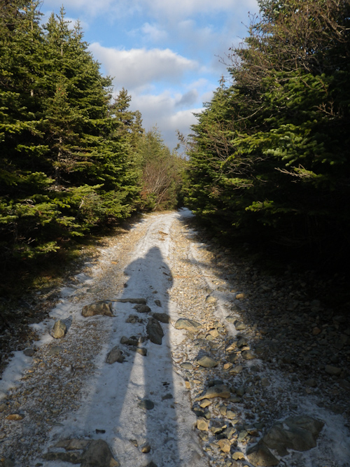 Sunlight on the trail - Torbay