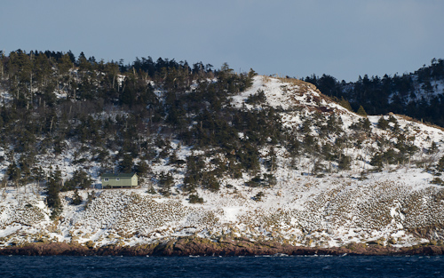 Gull Island Hilton - Witless Bay Ecological Reserve