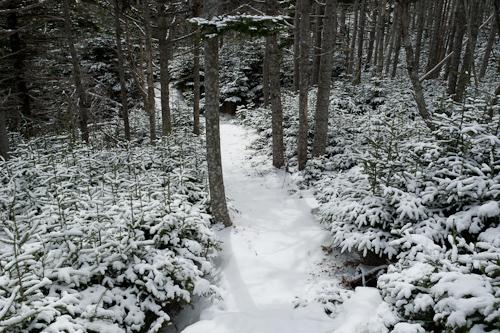 A bit of fresh snow - Stiles Cove Path