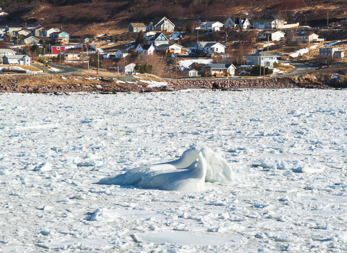 Bergy bit enclosed by sea ice - Maddox Cove