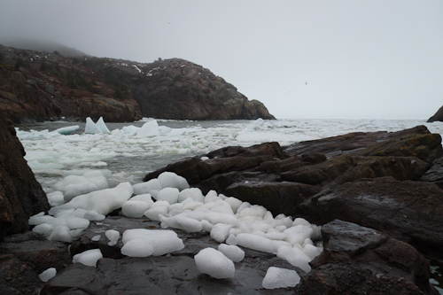 Chunks of ice - Quidi Vidi