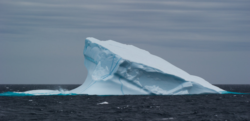Wedge iceberg - just outside of Bay Bulls